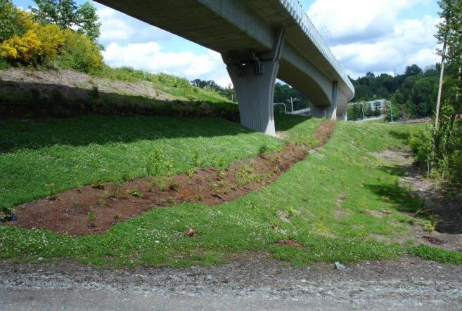 Sound Transit Central Link Light Rail Landscape Restoration